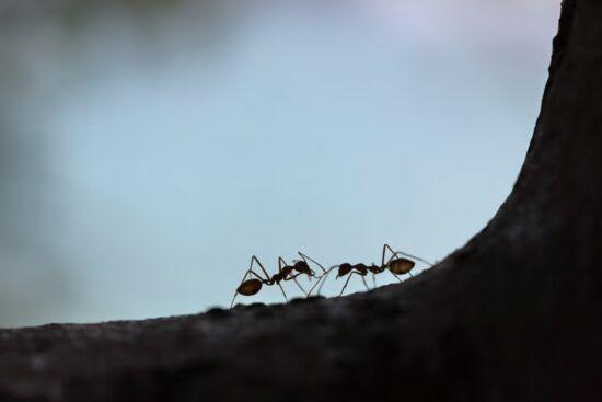 Η φιλοσοφία των μυρμηγκιών